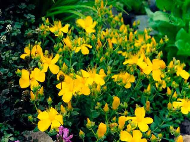 трава от крапивницы и аллергии
