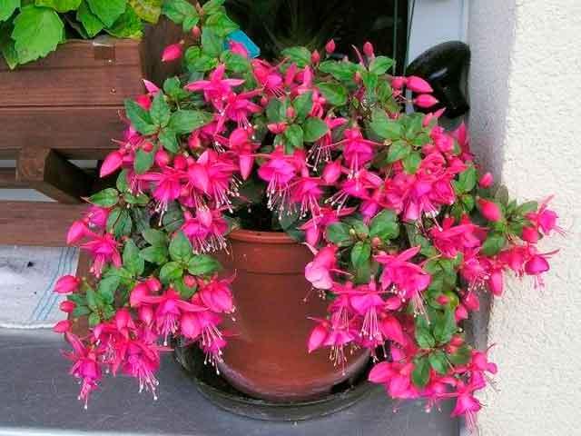 Фото цветов в домашних условиях