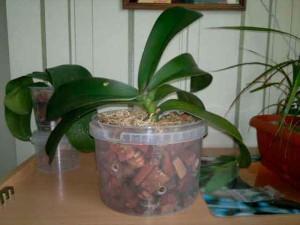 Орхидеи фото в горшках