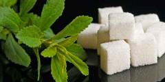 Стевия польза и вред, заменитель сахара, фото