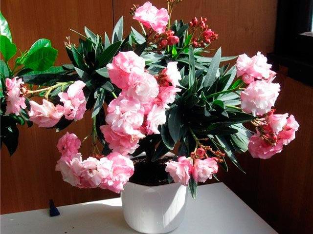 Уход и выращивание цветов в домашних условиях 833