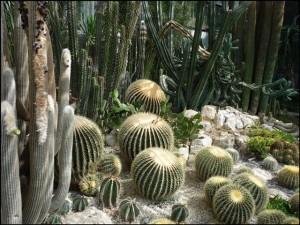 красивое фото кактусов