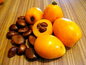 Мушмула описание, плоды  и фото