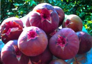 Растрескавшиеся плоды инжира