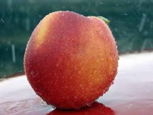 Фото красивого плода персика в каплях