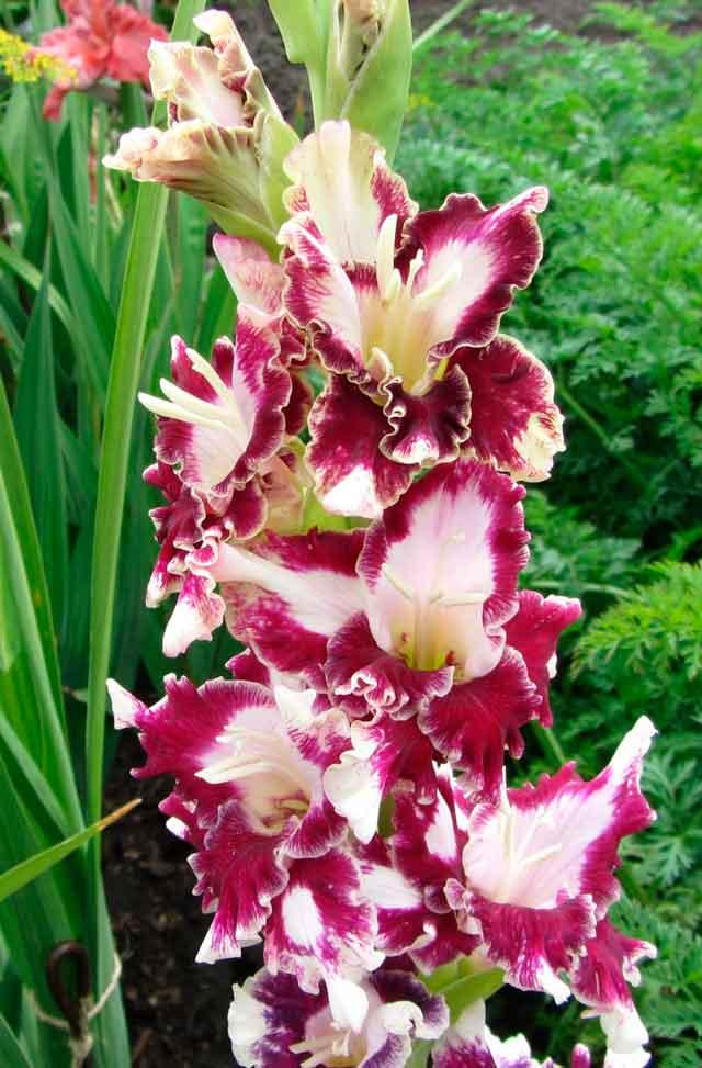 Необычный цветок и описание 16