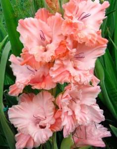 Розовое-гофре