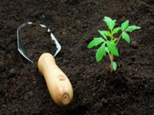 Готовим субстрат для выращивания рассады помидор