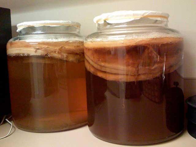 Какие полезные свойства чайного гриба? Как его применять и вырастить? Чайный гриб в домашних условиях, какие у него противопоказания. Оставьте свои отзывы и фото