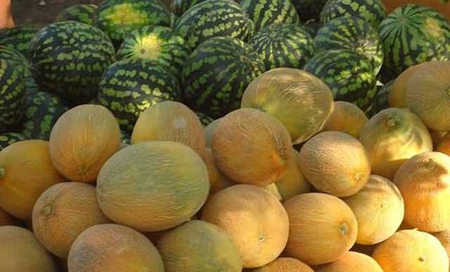 Какая польза от дыни? Дыня содержит в себе много полезных веществ для организма, применять можно как плоды дыни так и семена. Фото дыни