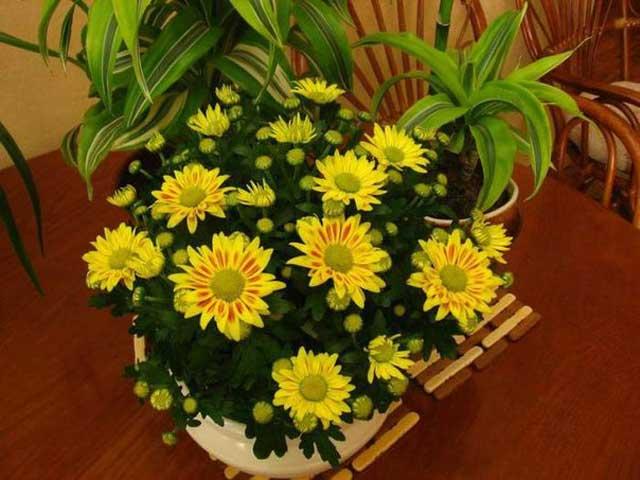 Растения для северного западного восточного и южного