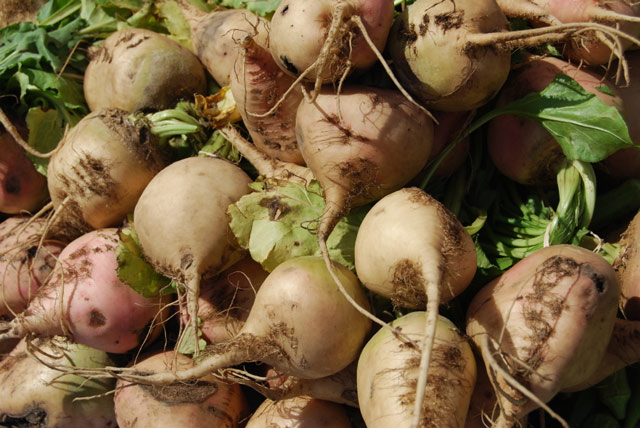 Брюква и ее полезные свойства, выращивание, приготовление, фото