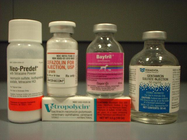 Антибиотики разрушают иммунитет фото