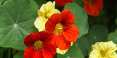 Цветы герберы фото