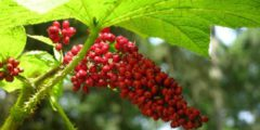 Иммунитет, топ 10 растений
