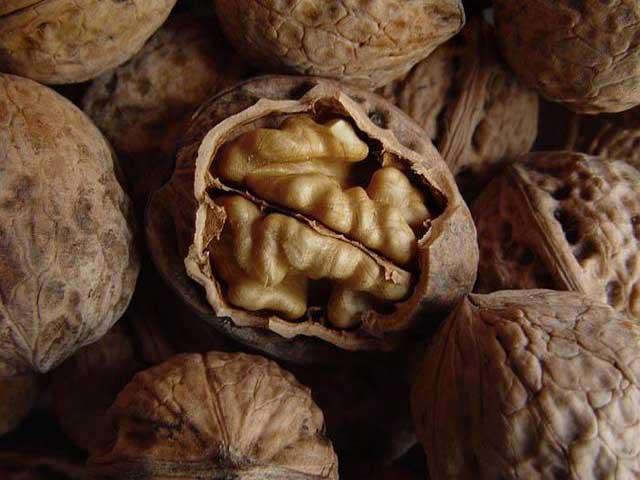 Грецкий орех фото, применение и сбор грецкого ореха.
